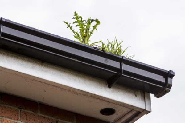 Soffits and Guttering Cleaning Service